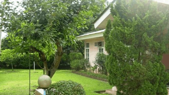 pohon disekitar rumah
